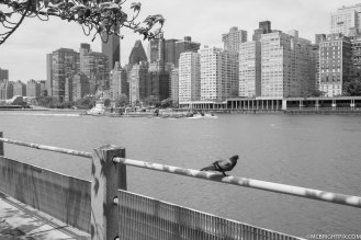 BIRD AND BUILDINGS